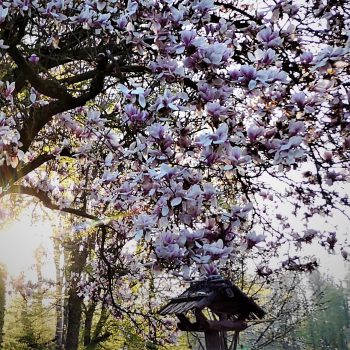 Schlaulenzen, Frühjahrsputz, Zeit, Innehalten, mentaler Keller